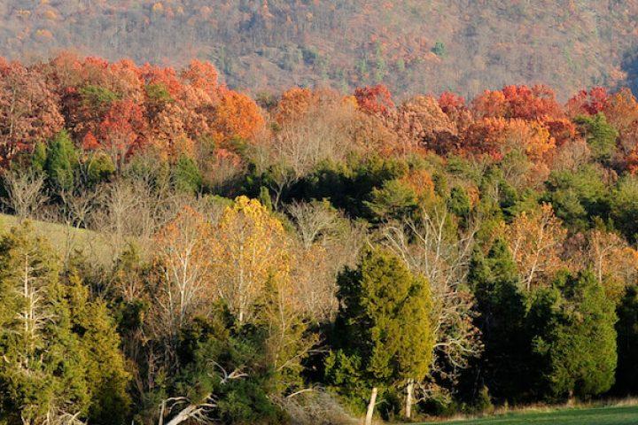 Fall trees Thanksgiving